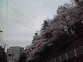 1004110.JPG